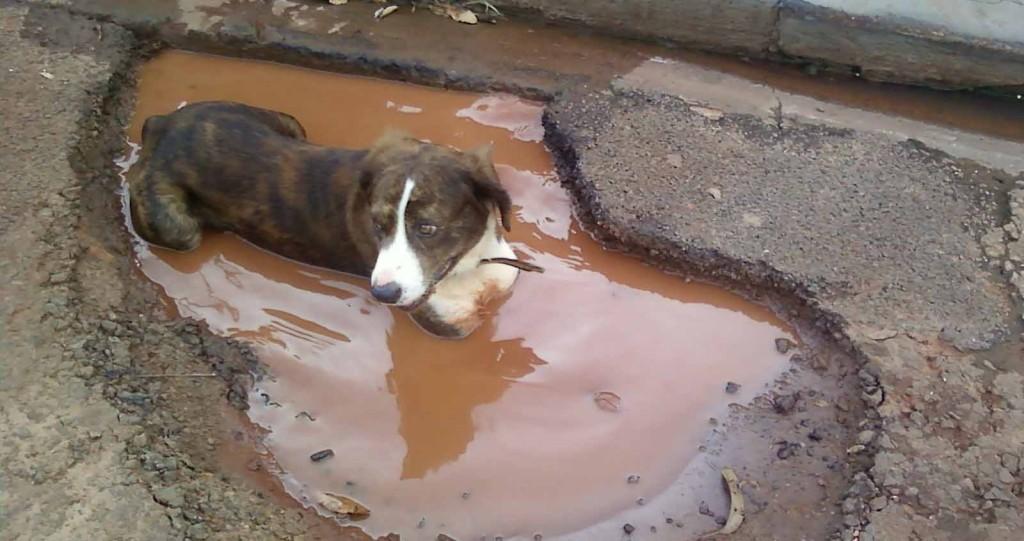 buraco-cachorro4
