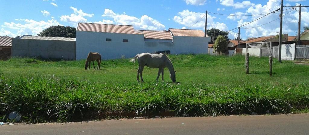 animais-dercílio-2014-12-26 16.01.34