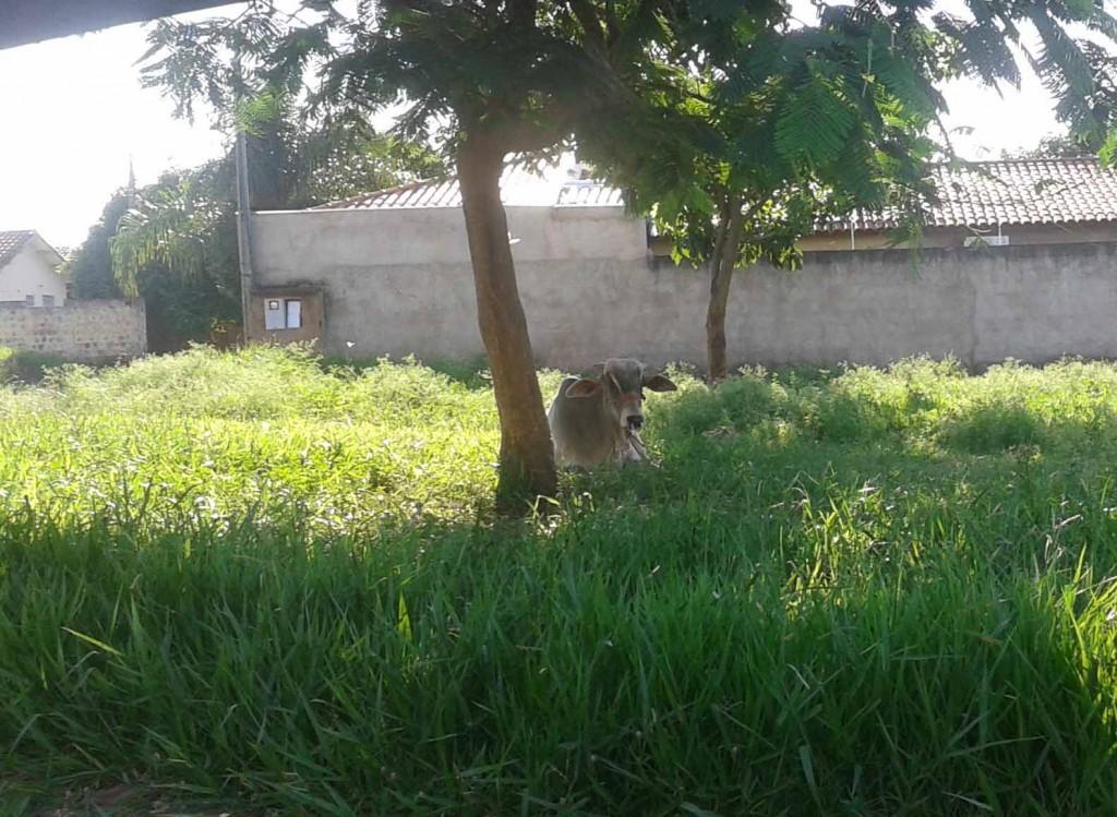 animais-dercílio-2014-12-27 08.48.54