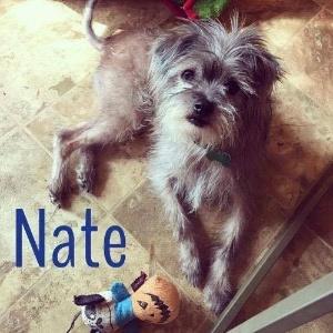 nate-cachorrinho-adotado-por-george-clooney