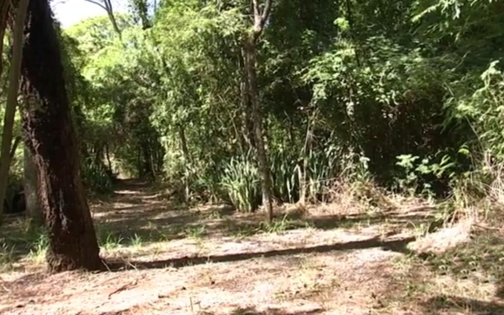 bosque jales